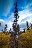 Hausse de lac fish, Whitehorse, paysage d'automne du Yukon Photographie stock libre de droits