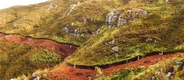 Hausse de montagne d'Outeniqua Images libres de droits