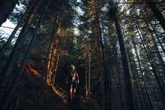 Hausse des aventures de seul photographe d'homme dans la forêt de soirée photos stock