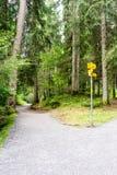 Hausse du chemin à travers la forêt Image stock
