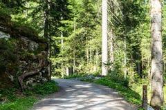 Hausse du chemin à travers la forêt Image libre de droits