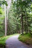 Hausse du chemin à travers la forêt Photographie stock