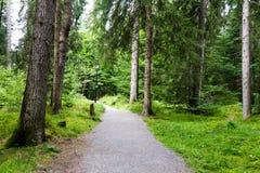 Hausse du chemin à travers la forêt Photo stock