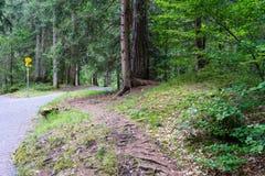 Hausse du chemin à travers la forêt Photos stock