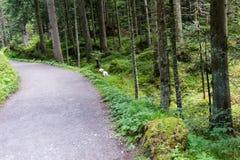 Hausse du chemin à travers la forêt Photographie stock libre de droits