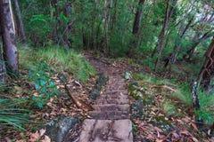 Hausse du chemin avec l'escalier dans la forêt image libre de droits