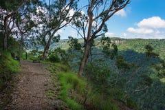 Hausse du chemin dans la forêt avec des arbres d'eucalyptus photographie stock
