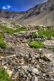 Hausse du lagopède alpin Cirque Images libres de droits