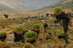 Hausse du mont Kenya photos stock