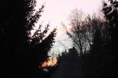 Hausse du soleil de forêt Photo stock