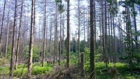 Hausse en été allemand dans la forêt Image libre de droits