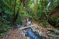 Hausse en Costa Rica Photo libre de droits