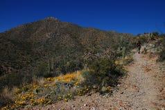 Hausse en stationnement national de Saguaro Image libre de droits