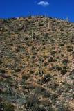 Hausse en stationnement national de Saguaro Photo libre de droits