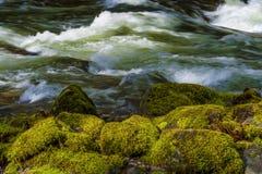 Hausse le long de Salmon River Mt Hood National Forest photo libre de droits