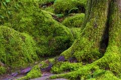 Hausse le long de Salmon River Mt Hood National Forest image stock