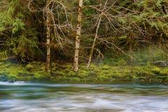 Hausse le long de Salmon River Mt Hood National Forest photographie stock