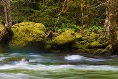 Hausse le long de Salmon River Mt Hood National Forest photos stock