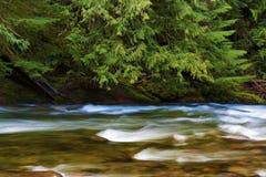 Hausse le long de Salmon River Mt Hood National Forest images stock