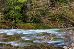 Hausse le long de Salmon River Mt Hood National Forest image libre de droits