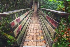 Hausse magnifique par la forêt photos libres de droits