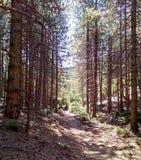 Hausse par le chemin forestier à la montagne de Parnitha Images libres de droits