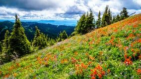 Hausse par les prés alpins complètement des Wildflowers colorés à Tod Mountain photographie stock