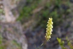 Hausse sur une montagne à côté de lac d'orchidée Images stock