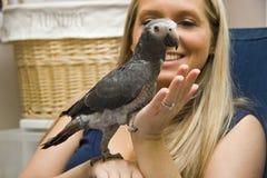 Haustier-afrikanisches Grau Lizenzfreies Stockfoto
