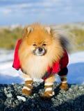 Haustier auf einem Weg Lizenzfreies Stockfoto