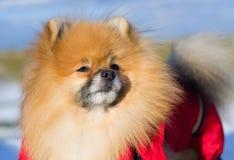 Haustier auf einem Weg Lizenzfreie Stockbilder
