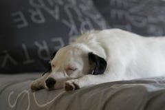 Haustier, das auf Bett schläft lizenzfreie stockfotografie