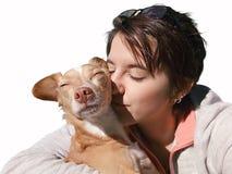 Haustier, das unter dem Sonnenlicht liebt lizenzfreies stockfoto