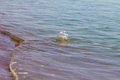 HAUSTIER-Flasche im Wasser Lizenzfreie Stockfotos