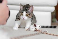 Haustier-Fotografie Lizenzfreie Stockfotografie