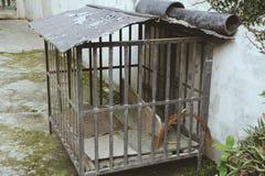 Haustier-Haus, unbenutzt lizenzfreies stockbild