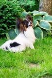 Haustier im Garten Lizenzfreie Stockfotos