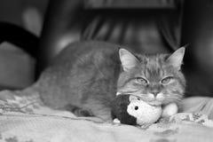 Haustier mit einem Spielzeug stockbild