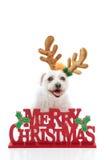 Haustier mit Meldung der frohen Weihnachten Stockbild