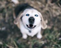 Haustier mit Persönlichkeit Lizenzfreies Stockfoto