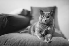 Haustier mit Persönlichkeit stockfoto
