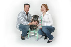 Haustier-Portraits Stockfoto