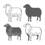 Haustier-Schaf-Gestaltungselement-Vektor Lizenzfreies Stockfoto