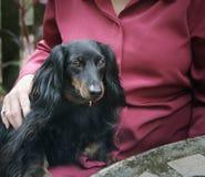 Haustier-Therapie Stockbild
