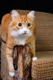 Haustier und Möbel stockbild