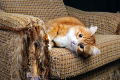 Haustier und Möbel stockbilder