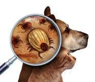Haustier-Zecke lizenzfreie abbildung