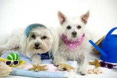 Haustiere auf Ferien Stockfotografie