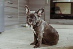 Haustiere in Ihrem Lieblingshaus lizenzfreies stockbild