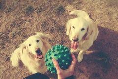 Haustiere und Hunde Ausbildung und Hunde erziehend Begleiter streichelt Konzept Lizenzfreie Stockfotografie